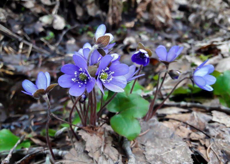 Kevätluonto kutsuu - vinkkejä koko perheen luontoretkiin
